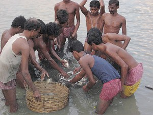 People involved in Pisiculture